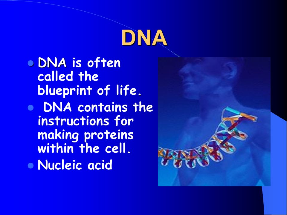 Dna structure and replication dna dna dna is often called the 2 dna structure and replication malvernweather Images