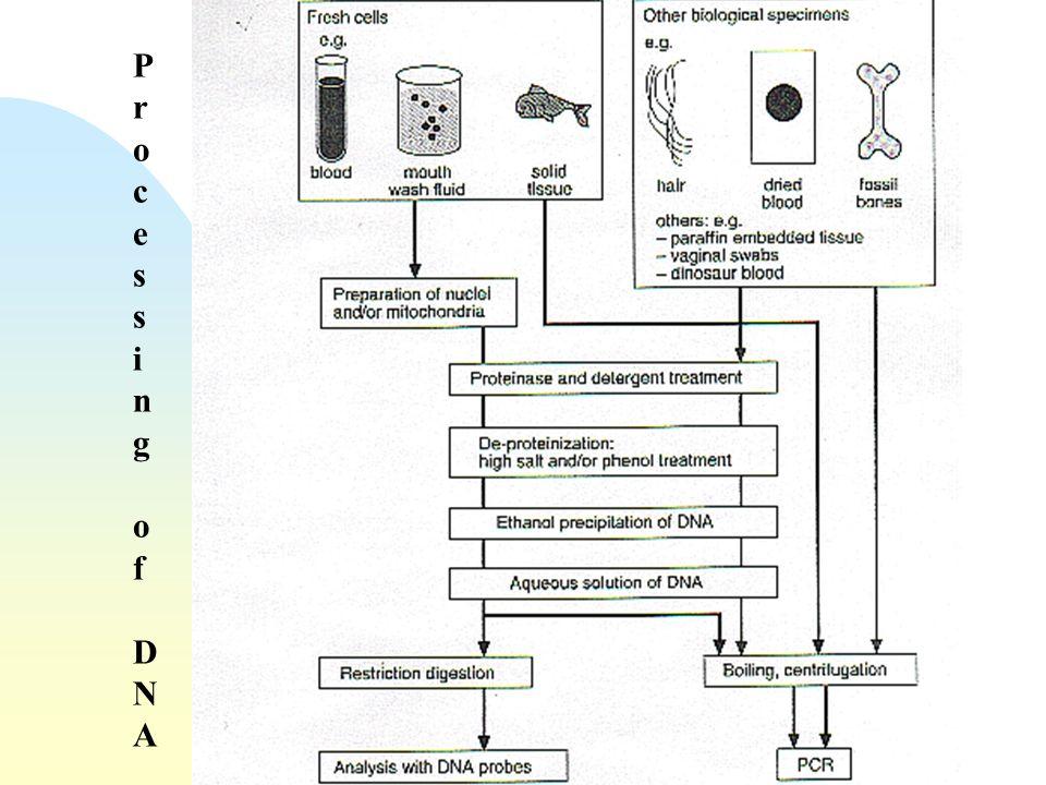 ProcessingofDNAProcessingofDNA