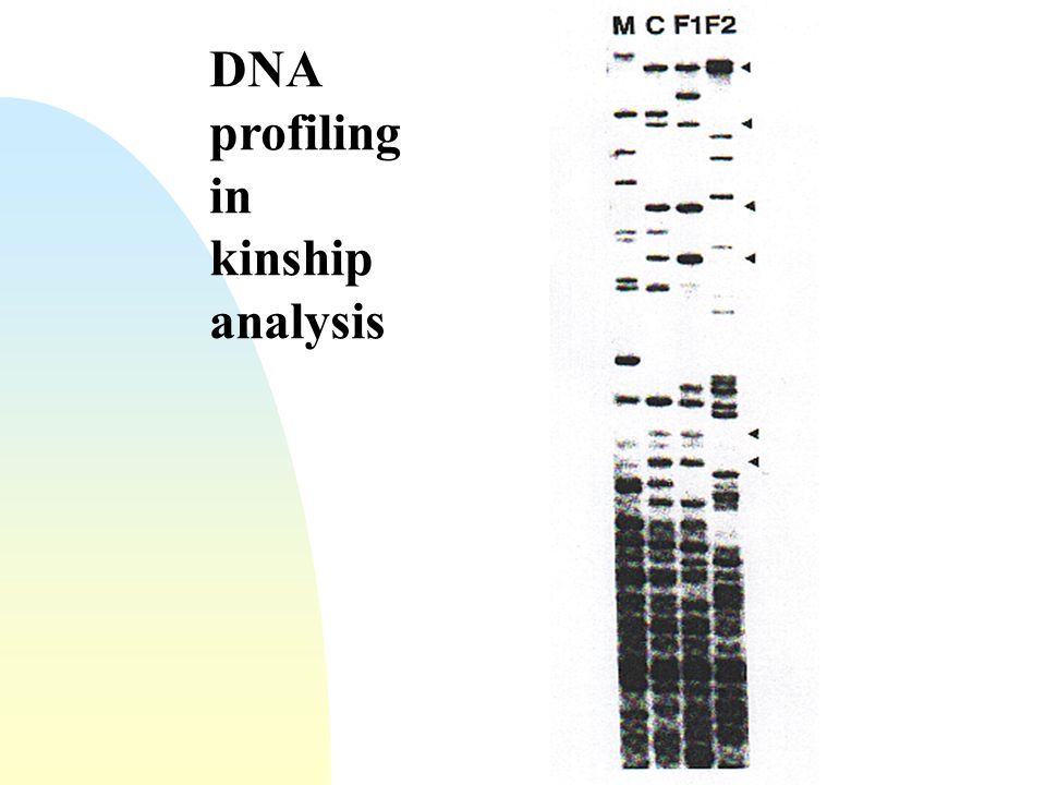 DNA profiling in kinship analysis