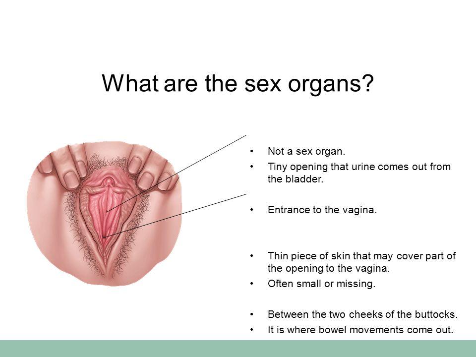 Entrance of vagina