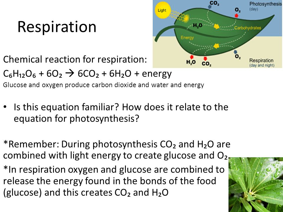 ib design labs on respiration in plants This activity introduces a simple method of measuring the rate of photosynthesis and leads students to design photosynthesis experiments and ib guide on.