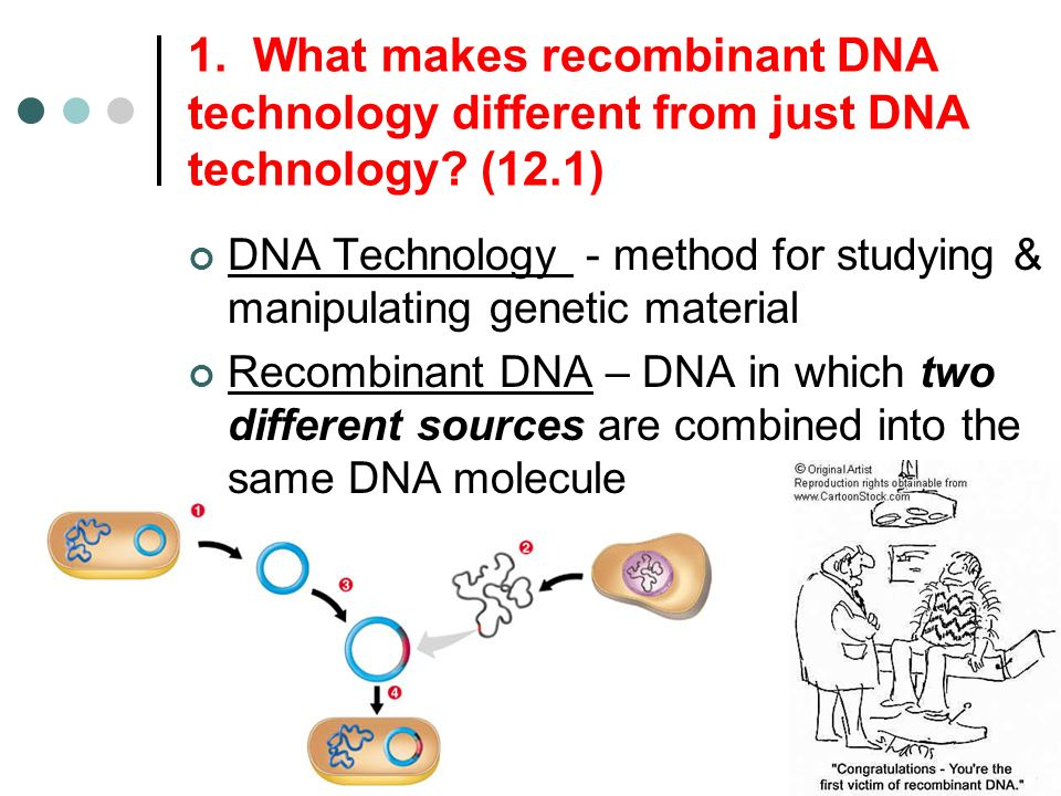 Chapter 12 DNA Technology and Genomics aka GENETIC ENGINEERING – Dna Technology Worksheet