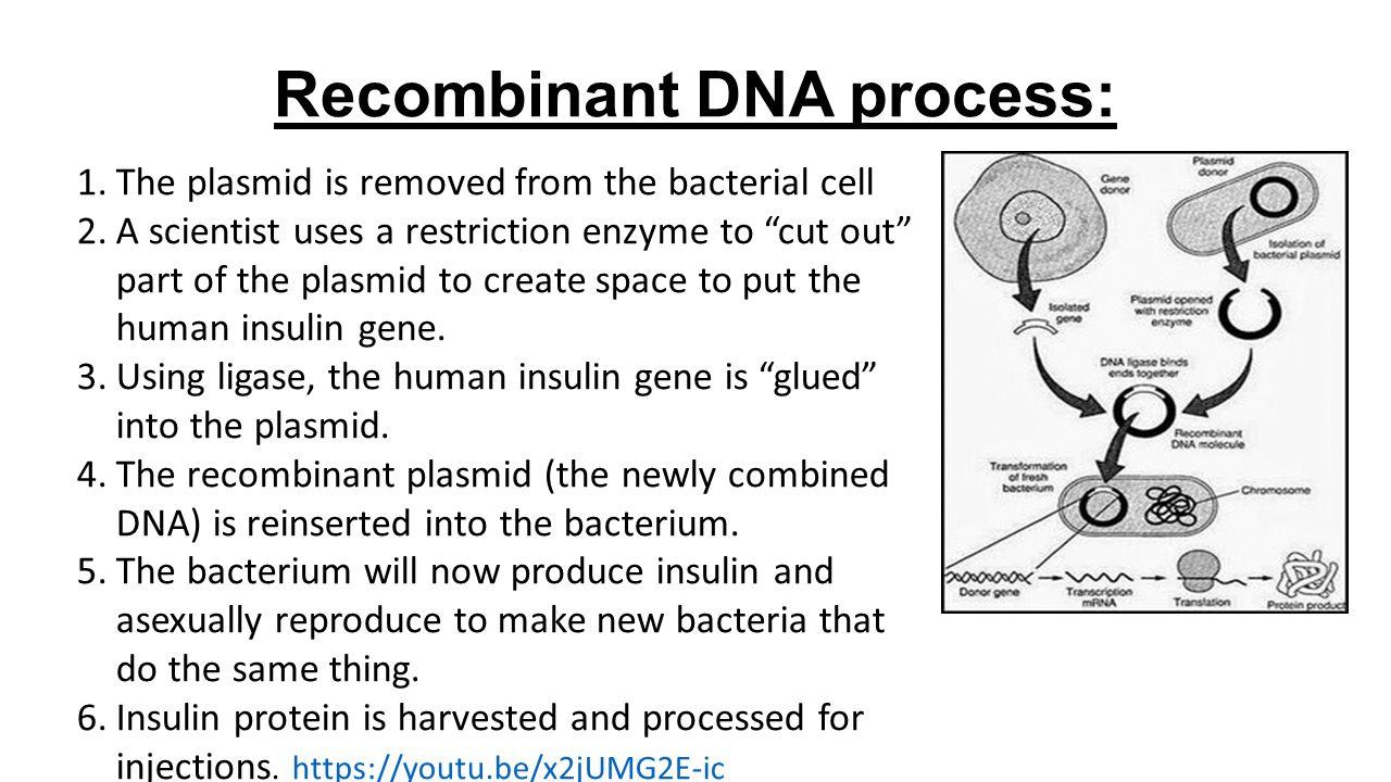 Gene Technology Notes Genomes Dna Fingerprinting Recombinant Dna