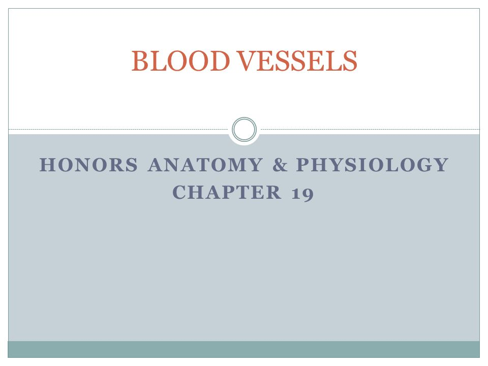 HONORS ANATOMY & PHYSIOLOGY CHAPTER 19 BLOOD VESSELS. - ppt download