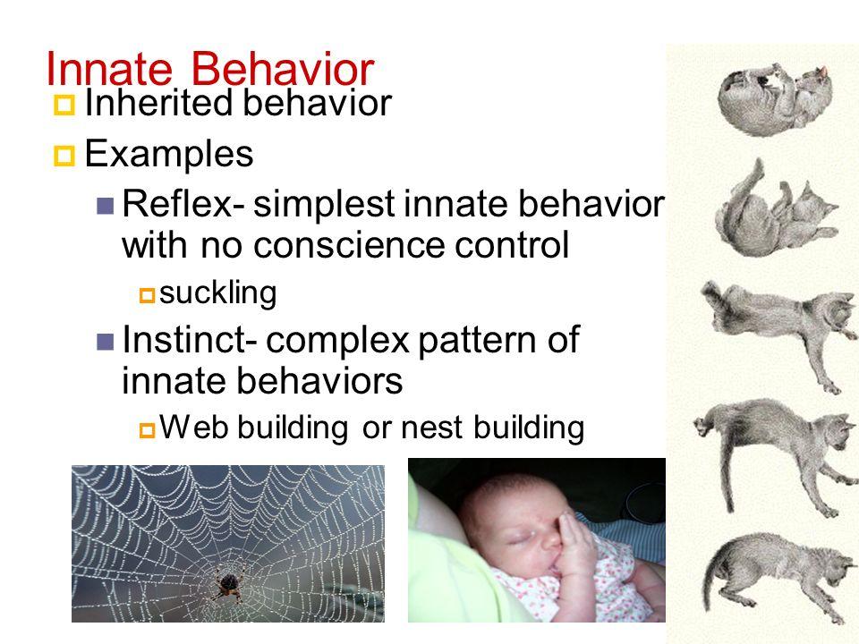 Animal Behavior Behavior Anything An Animal Does In Response To