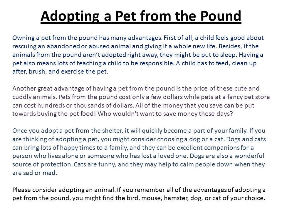 to own a pet essay Persuasive essay on adopting a dog the main reason why so many dogs are available for adoption is there are many individuals who give up their pets to own.