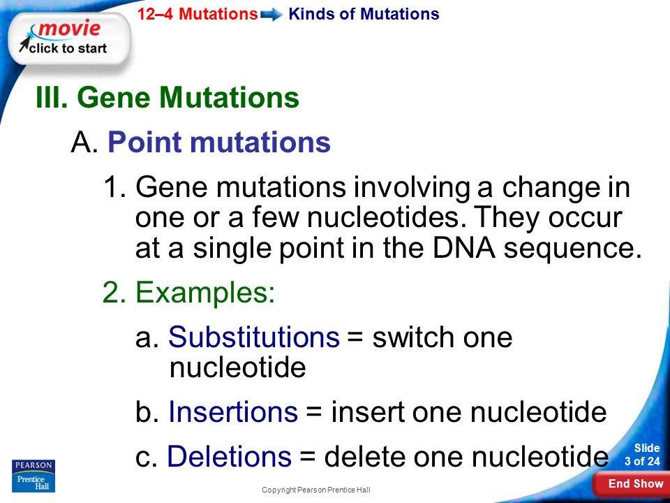 End Show 12–4 Mutations Slide 3 of 24 Copyright Pearson Prentice Hall Kinds of Mutations III.
