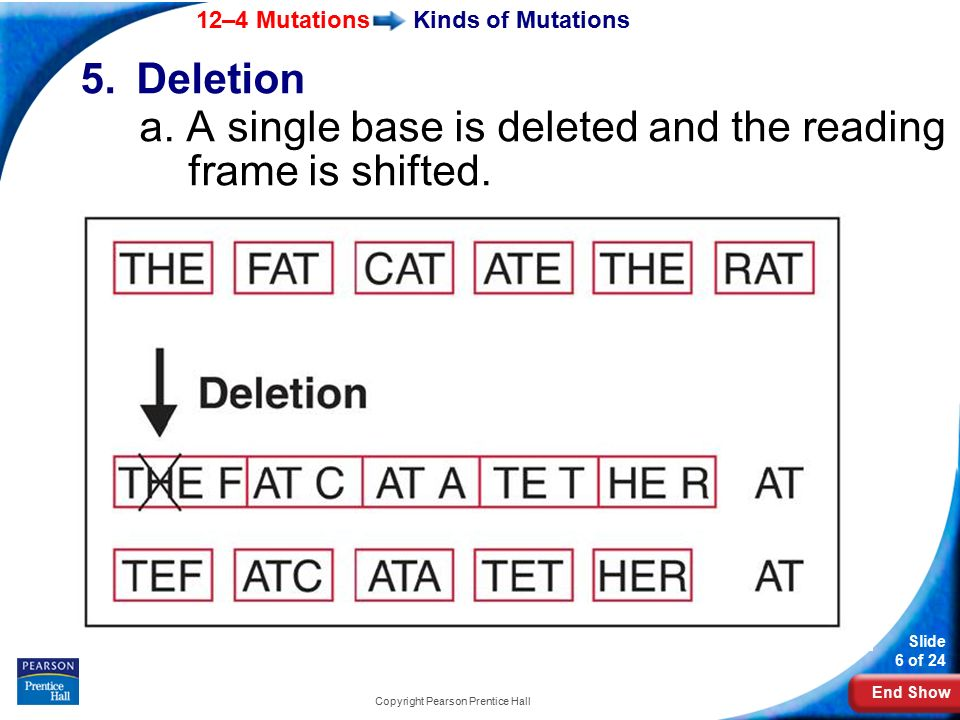 End Show 12–4 Mutations Slide 6 of 24 Copyright Pearson Prentice Hall Kinds of Mutations 5.Deletion a.