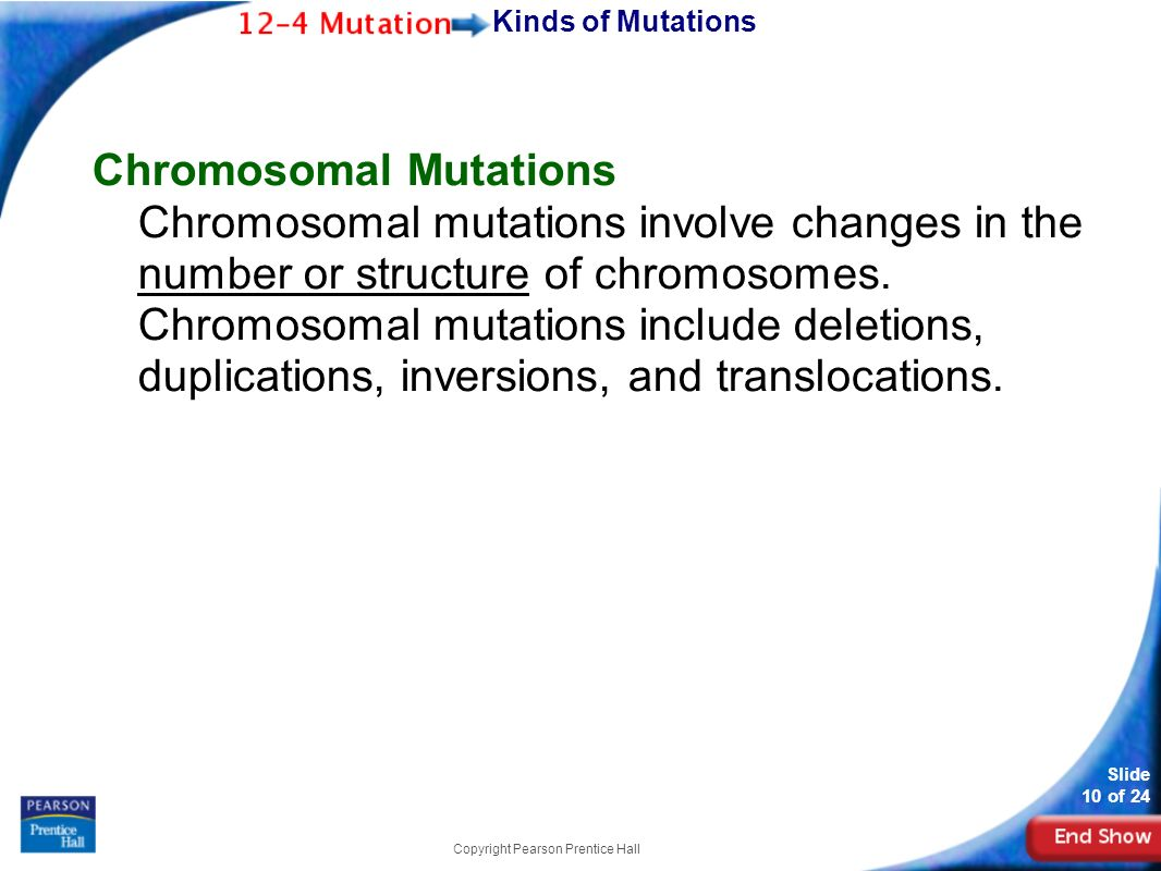 Slide 1 of 24 Copyright Pearson Prentice Hall Biology ppt download – Chromosomal Mutations Worksheet