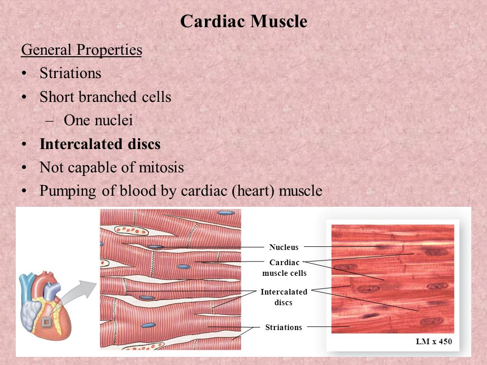 Unit V Movement Muscle Tissue Chapter 4 Pg Chapter 9 Pg Ppt