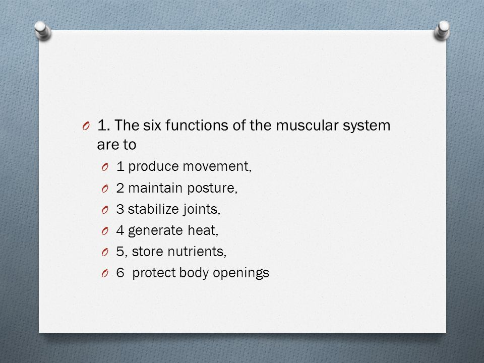 Muscular System Study Guide O 1 The Six Functions Of The Muscular