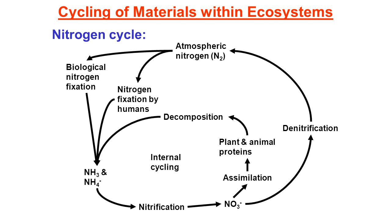 Nitrogen and carbon cycle unit 4 nutrient cycles in marine 9 cycling pooptronica Choice Image