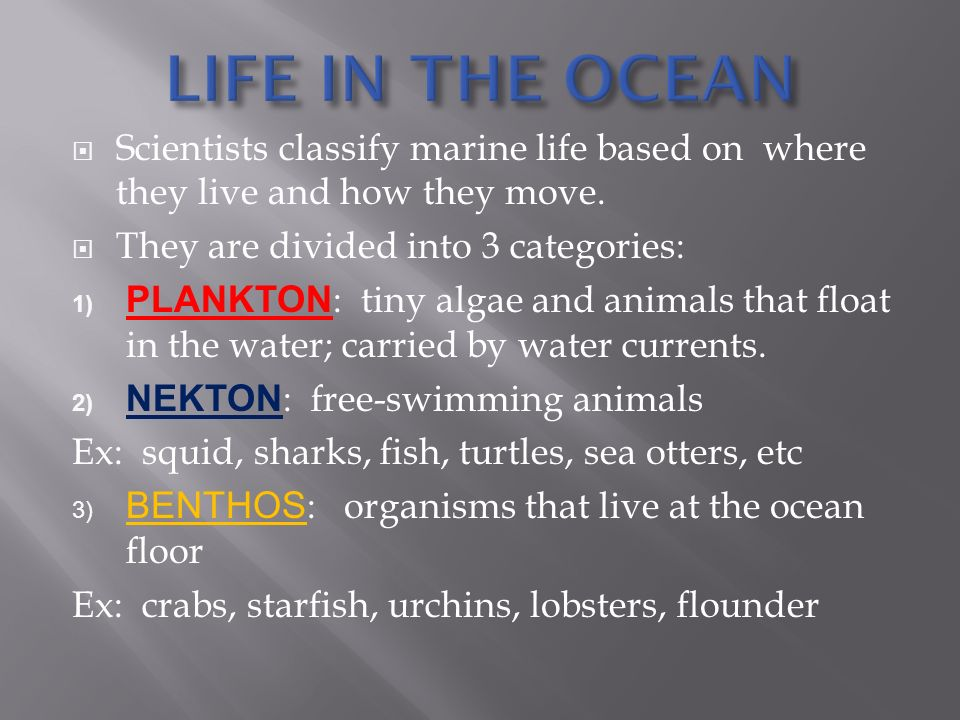  Scientists classify marine life based on where they live and how they move.
