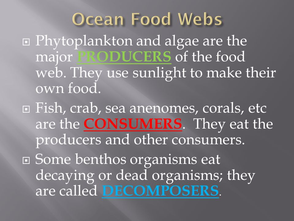  Phytoplankton and algae are the major PRODUCERS of the food web.