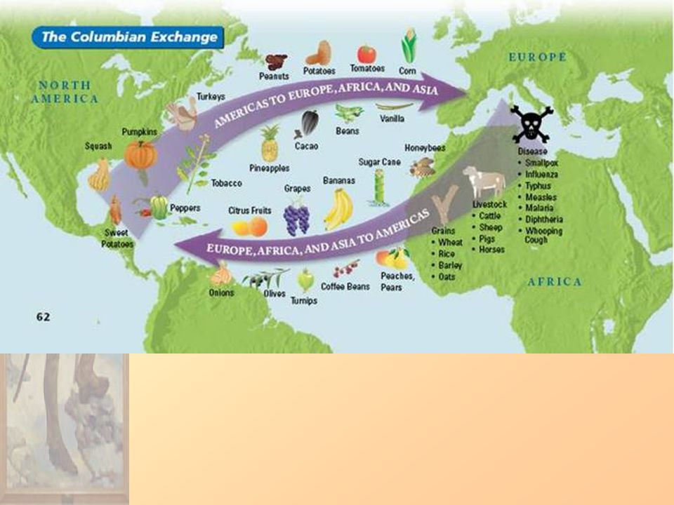 argument of how the columbian exchange shaped the modern world Exploration of how the world we now live in has been shaped by a number the early modern world: ∞ what were the consequences of the 'columbian exchange.