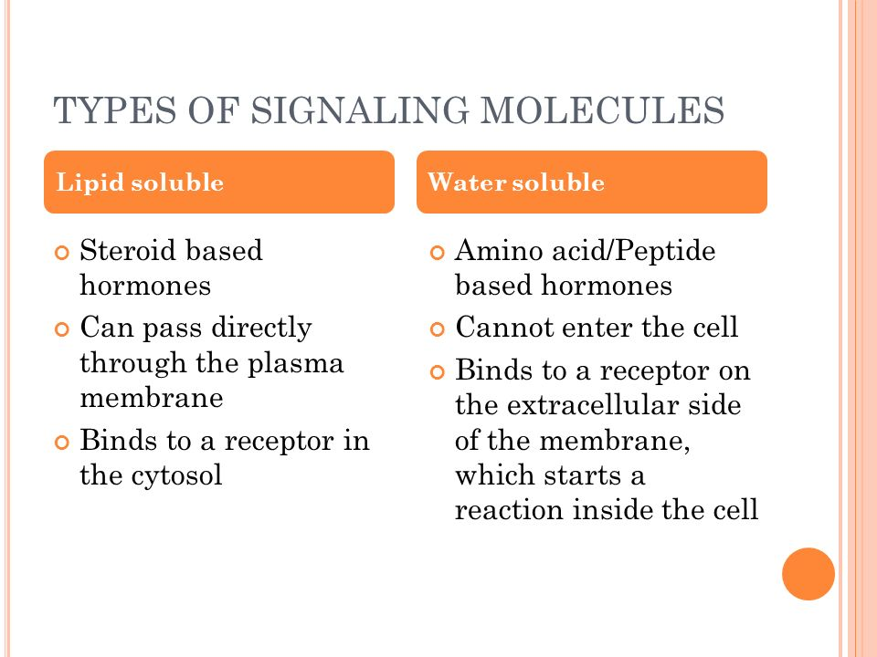Explain how a hormone works, use the terms target cells and receptors.?