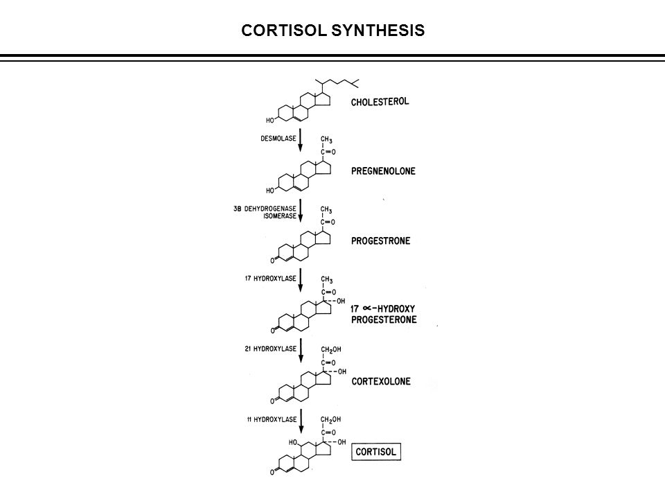 CORTISOL SYNTHESIS