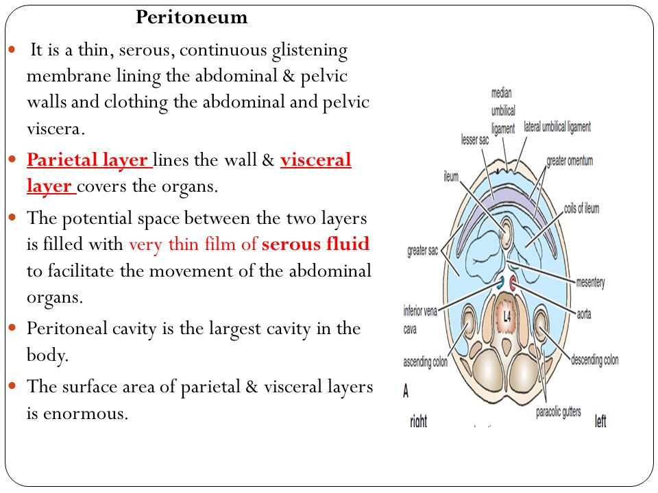 Peritoneal spaces anatomy 9394867 - follow4more.info