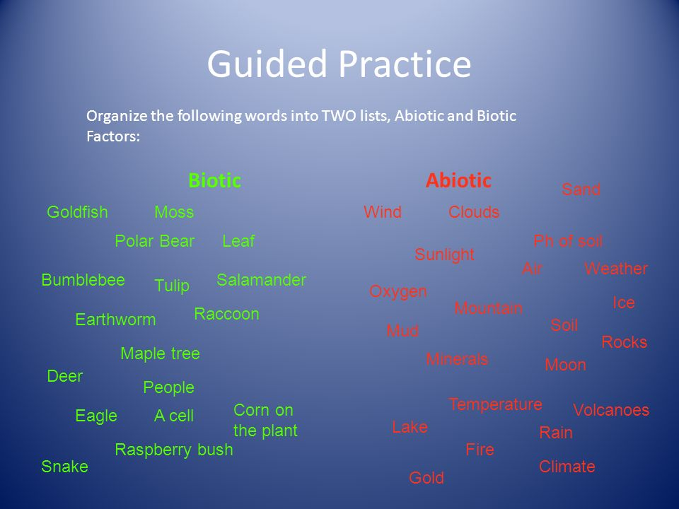 Guided Practice Organize the following words into TWO lists, Abiotic and Biotic Factors: BioticAbiotic Clouds Sunlight Sand Ph of soil Air Wind Soil Rain Mud Rocks Ice Oxygen Minerals Mountain Temperature Lake Volcanoes Moon Gold Fire Weather Climate Tulip Bumblebee Moss Leaf Raccoon Polar Bear A cell Deer Maple tree Raspberry bush Goldfish People Eagle Snake Earthworm Corn on the plant Salamander