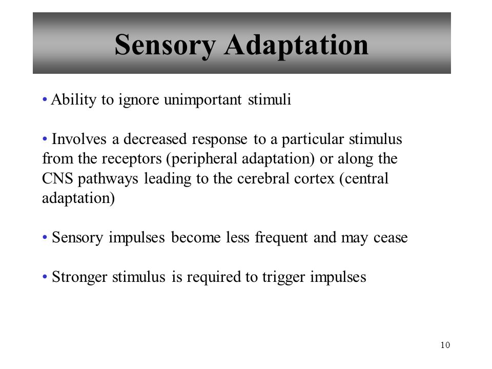 10 Sensory Adaptation Ability to ignore unimportant stimuli Involves a decreased response to a particular stimulus from the receptors (peripheral adaptation) or along the CNS pathways leading to the cerebral cortex (central adaptation) Sensory impulses become less frequent and may cease Stronger stimulus is required to trigger impulses