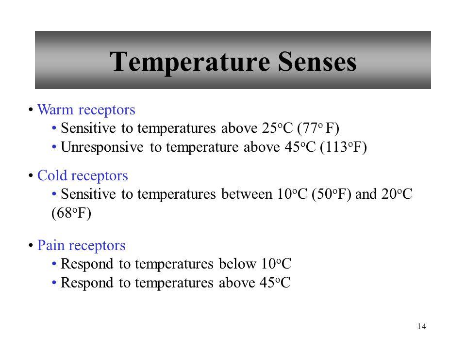 14 Temperature Senses Warm receptors Sensitive to temperatures above 25 o C (77 o F) Unresponsive to temperature above 45 o C (113 o F) Cold receptors Sensitive to temperatures between 10 o C (50 o F) and 20 o C (68 o F) Pain receptors Respond to temperatures below 10 o C Respond to temperatures above 45 o C