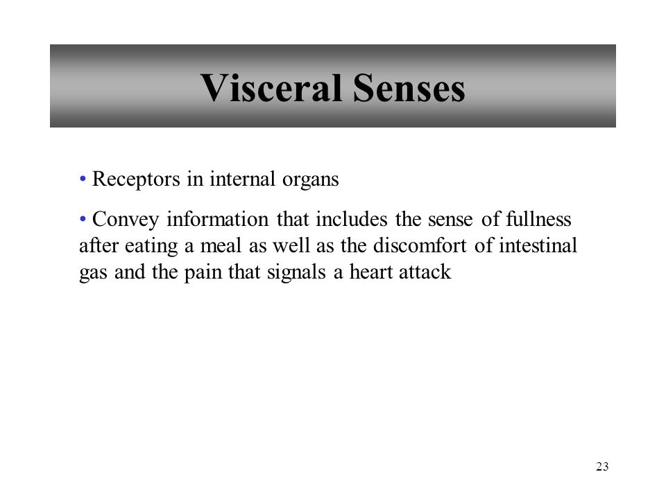 23 Visceral Senses Receptors in internal organs Convey information that includes the sense of fullness after eating a meal as well as the discomfort of intestinal gas and the pain that signals a heart attack