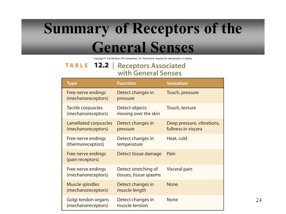 24 Summary of Receptors of the General Senses