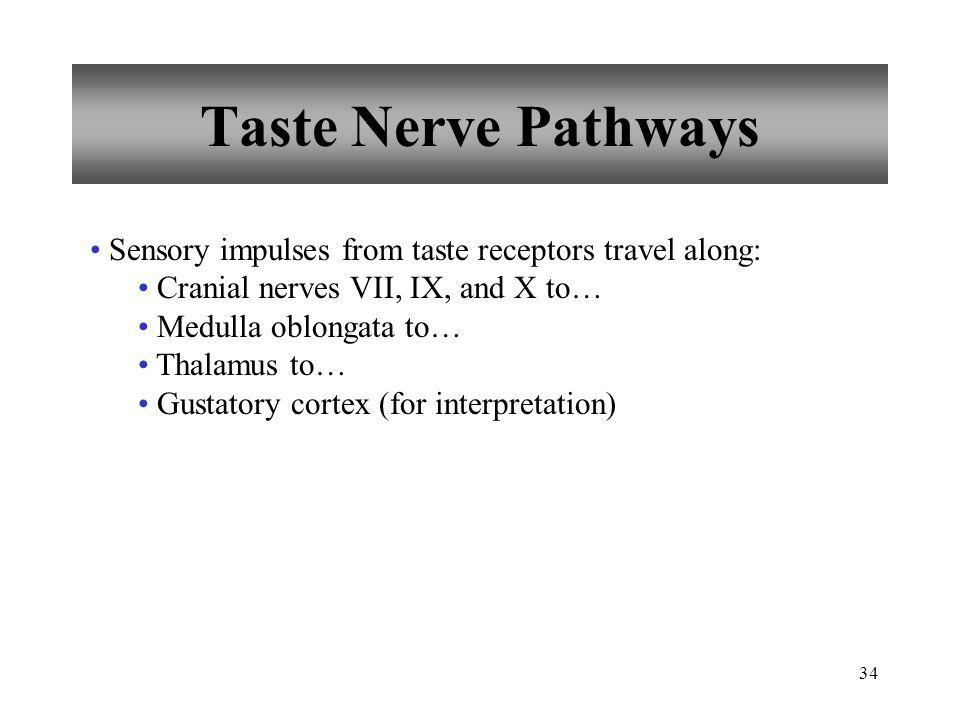 34 Taste Nerve Pathways Sensory impulses from taste receptors travel along: Cranial nerves VII, IX, and X to… Medulla oblongata to… Thalamus to… Gustatory cortex (for interpretation)