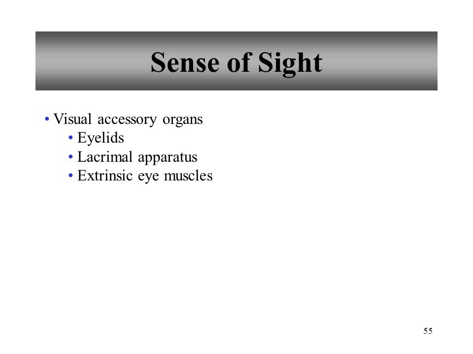 55 Sense of Sight Visual accessory organs Eyelids Lacrimal apparatus Extrinsic eye muscles