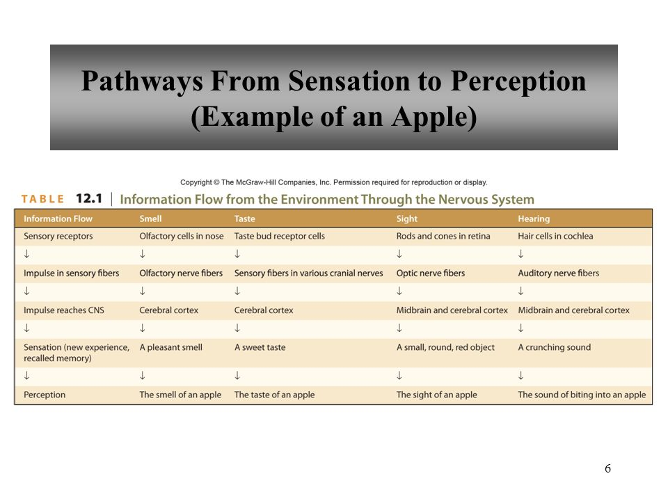 6 Pathways From Sensation to Perception (Example of an Apple)