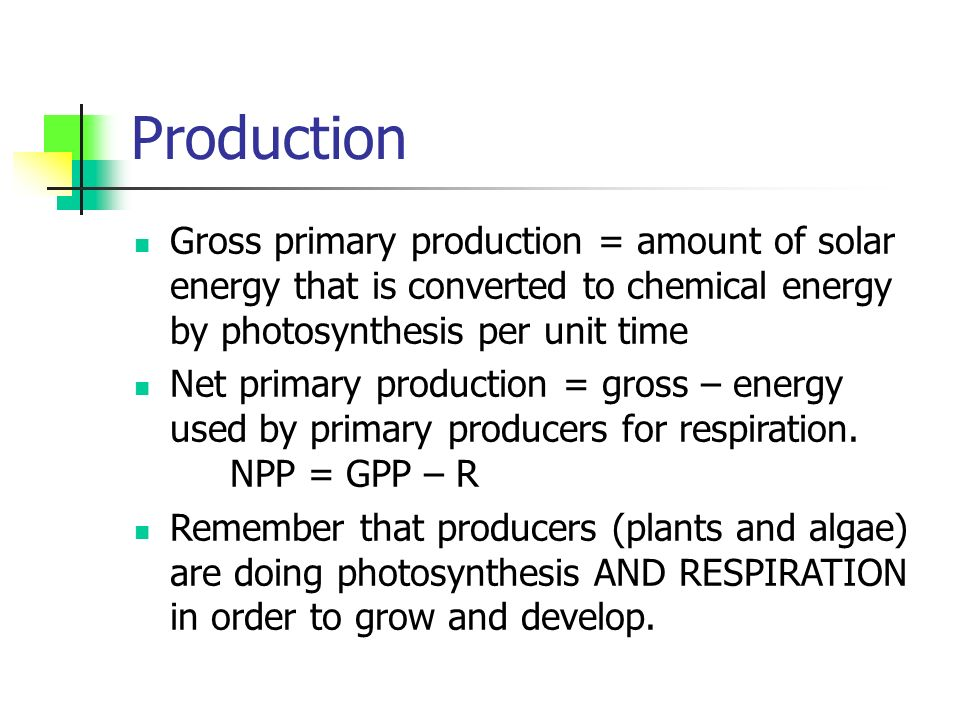 Production Gross primary production = amount of solar energy that is converted to chemical energy by photosynthesis per unit time Net primary production = gross – energy used by primary producers for respiration.