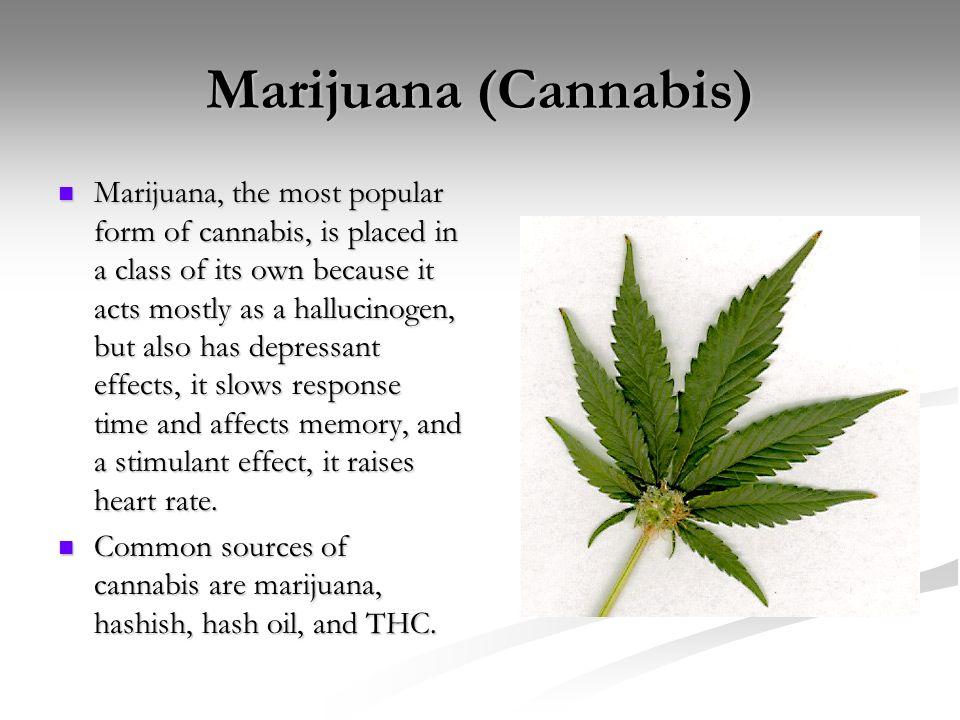 marijuana description drug and its aeffects marijuana, the deceptive drug essay about marijuana-a description of the drug and its aeffects for marijuana being a dangerous drug on its own.