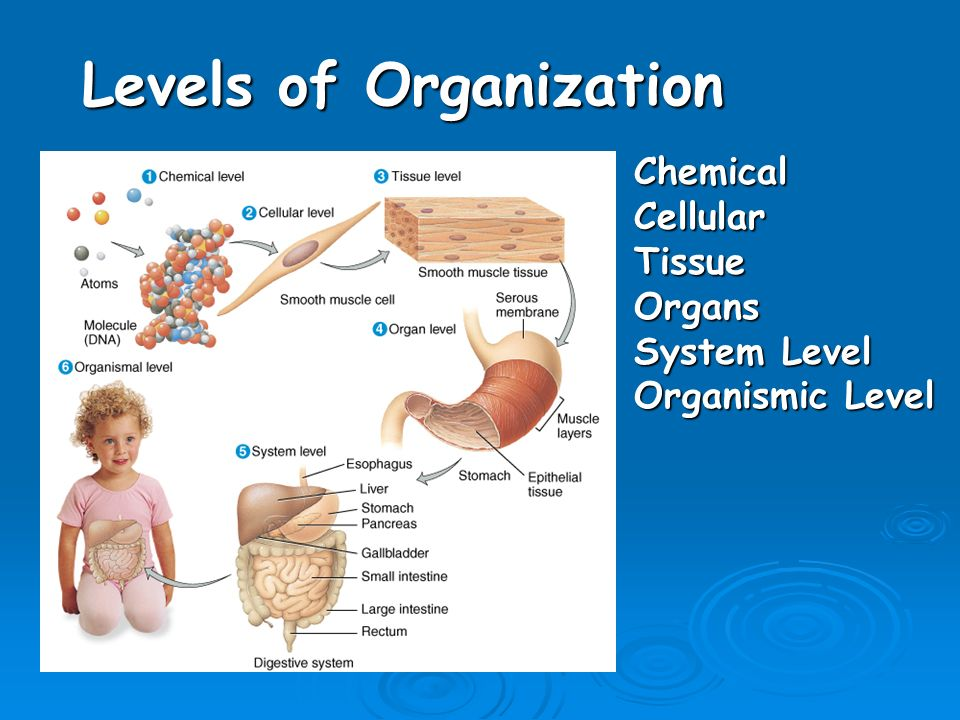 Chapter 1 An Introduction to the Human Body Anatomy science of ...