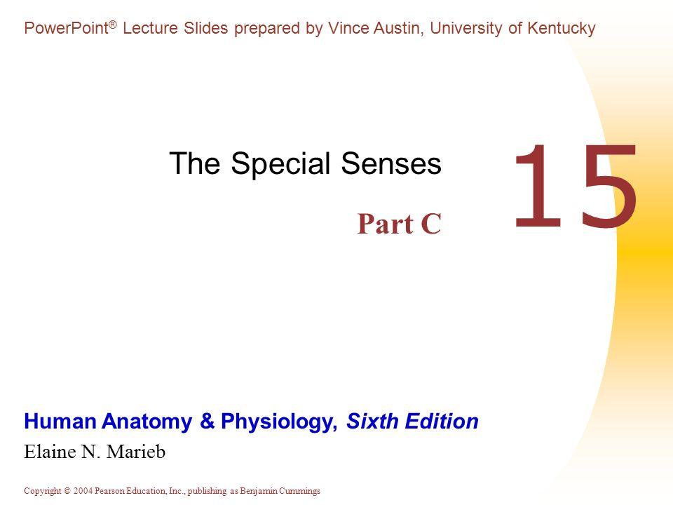 The Special Senses: Part C - ppt video online download