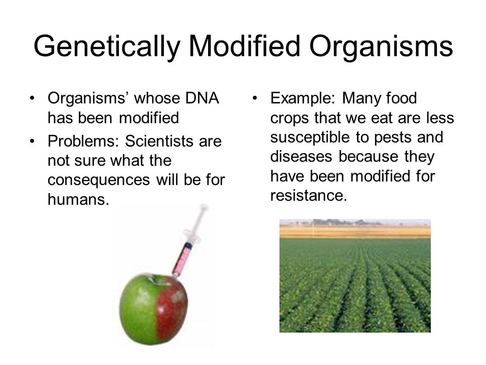 genetically modified organism essay Genetically modified organisms this essay genetically modified organisms and other 63,000+ term papers, college essay examples and free essays are available now on reviewessayscom.