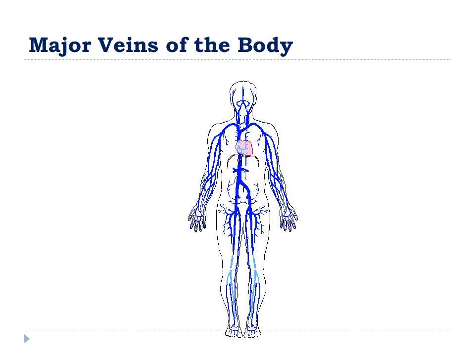 Major Veins of the Body
