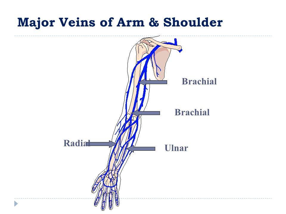 Major Veins of Arm & Shoulder Ulnar Radial Brachial