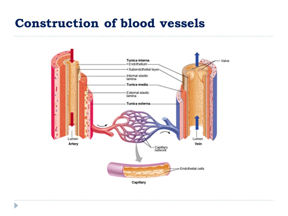 Construction of blood vessels