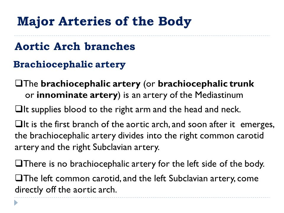 Brachiocephalic artery  The brachiocephalic artery (or brachiocephalic trunk or innominate artery) is an artery of the Mediastinum  It supplies blood to the right arm and the head and neck.