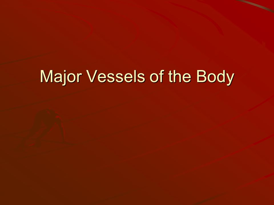 Major Vessels of the Body