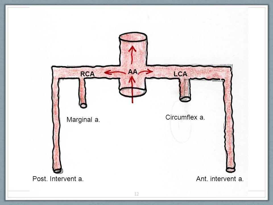 AA RCALCA Circumflex a. Ant. intervent a. Marginal a. Post. Intervent a. 12