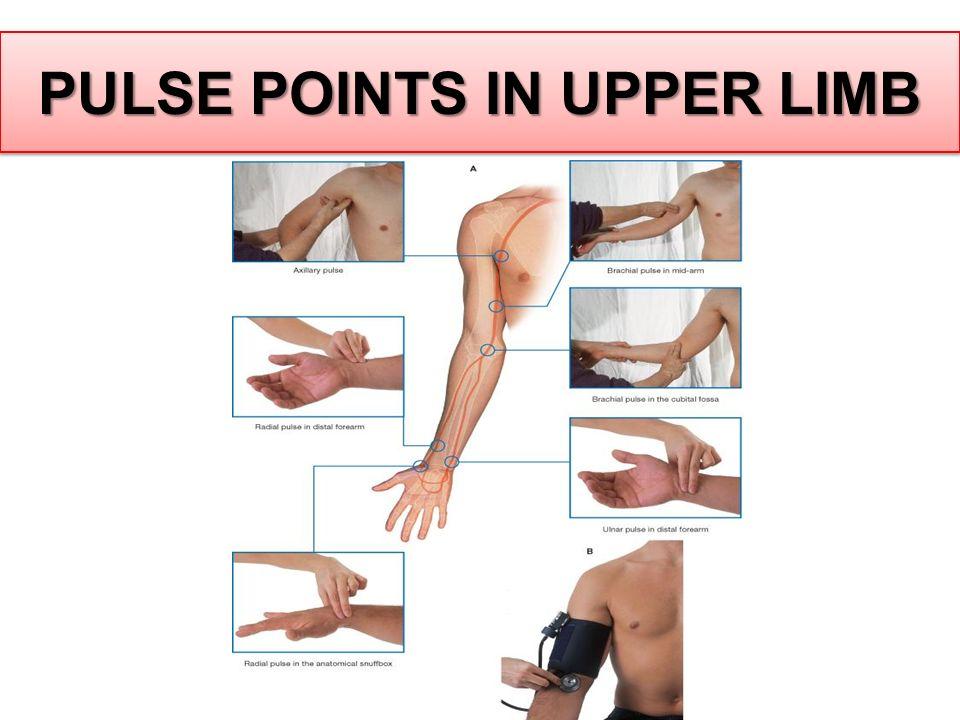 PULSE POINTS IN UPPER LIMB