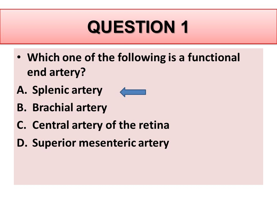 QUESTION 1 Which one of the following is a functional end artery.