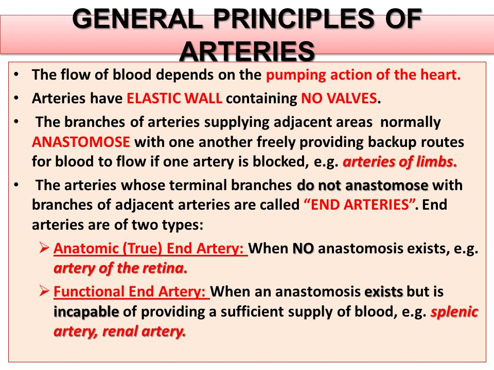 GENERAL PRINCIPLES OF ARTERIES The flow of blood depends on the pumping action of the heart. Arteries have ELASTIC WALL containing NO VALVES. arteries