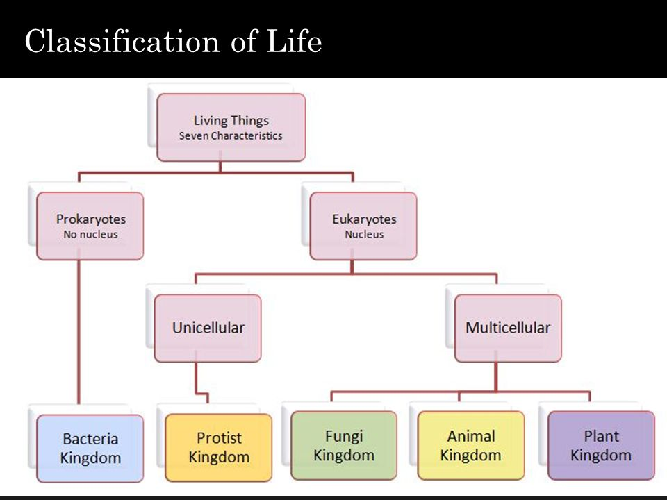 Structure and functions of microorganisms classification of life 2 classification of life ccuart Choice Image