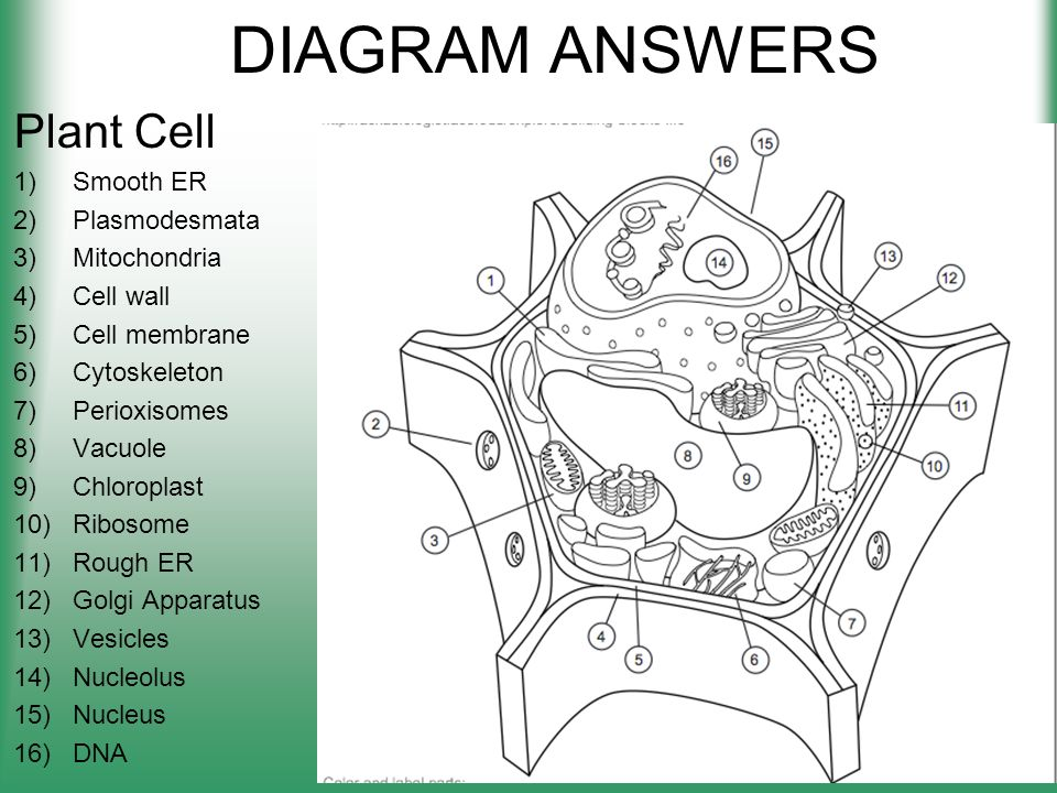 Cell structure worksheets pdf