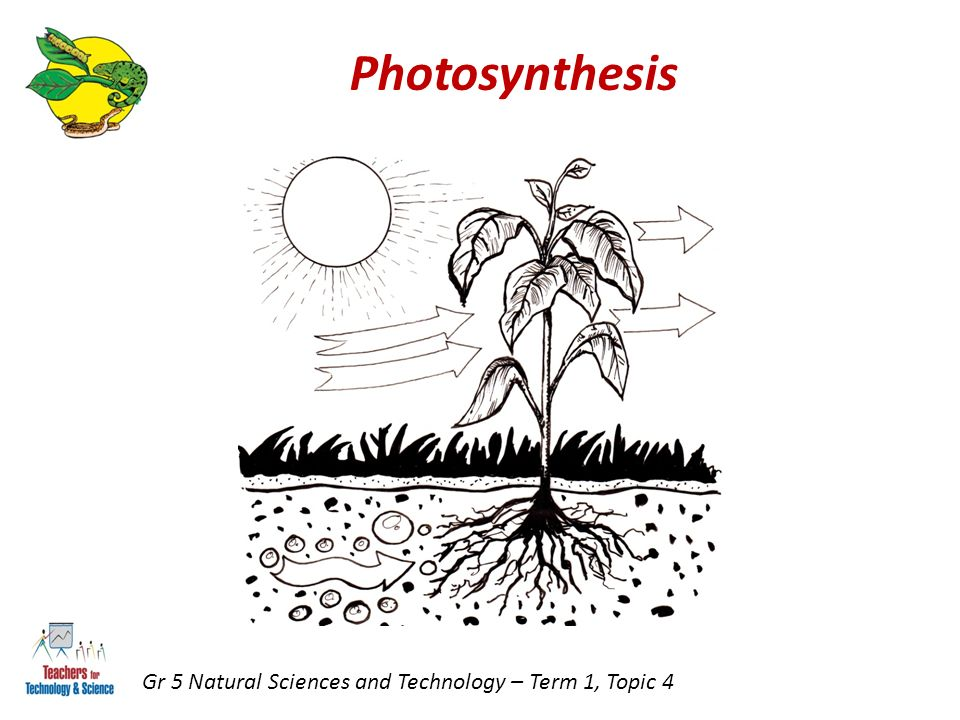 Photosynthesis Gr 5 Natural Sciences and Technology – Term 1, Topic 4