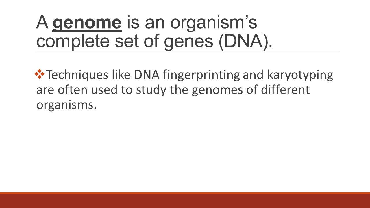 Dna fingerprinting pbs worksheet answers