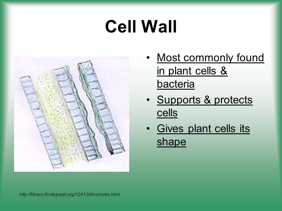 plant cell essays Advertisements: in this essay we will discuss about:- 1 definition of osmosis 2 types of osmosis 3 osmotic pressure 4 factors 5 importance 6 osmotic relations of plant cells.