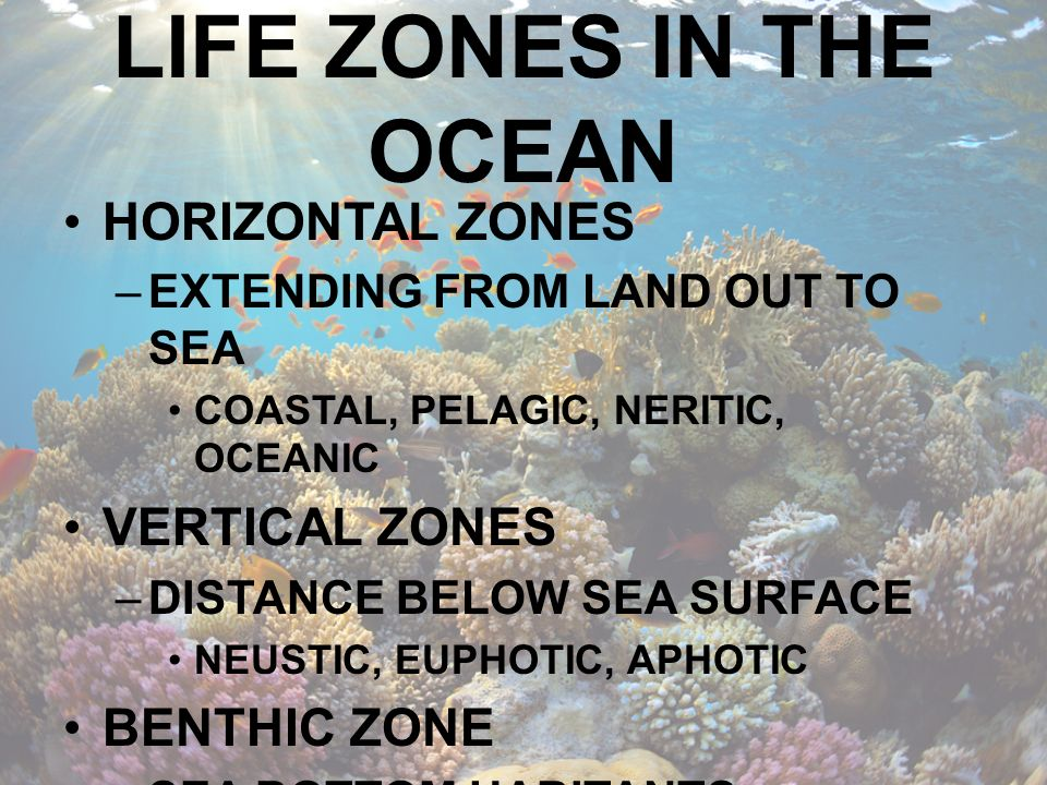 HORIZONTAL ZONE COASTAL ZONE (INTERTIDAL) –Region where tides expose the sea bottom for some part of the day.